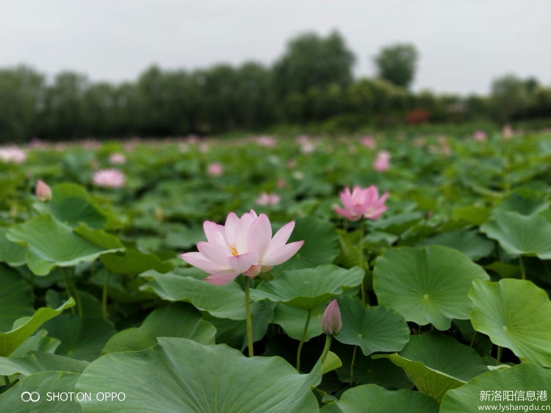 莲花公园赏花+泡温泉+水世界