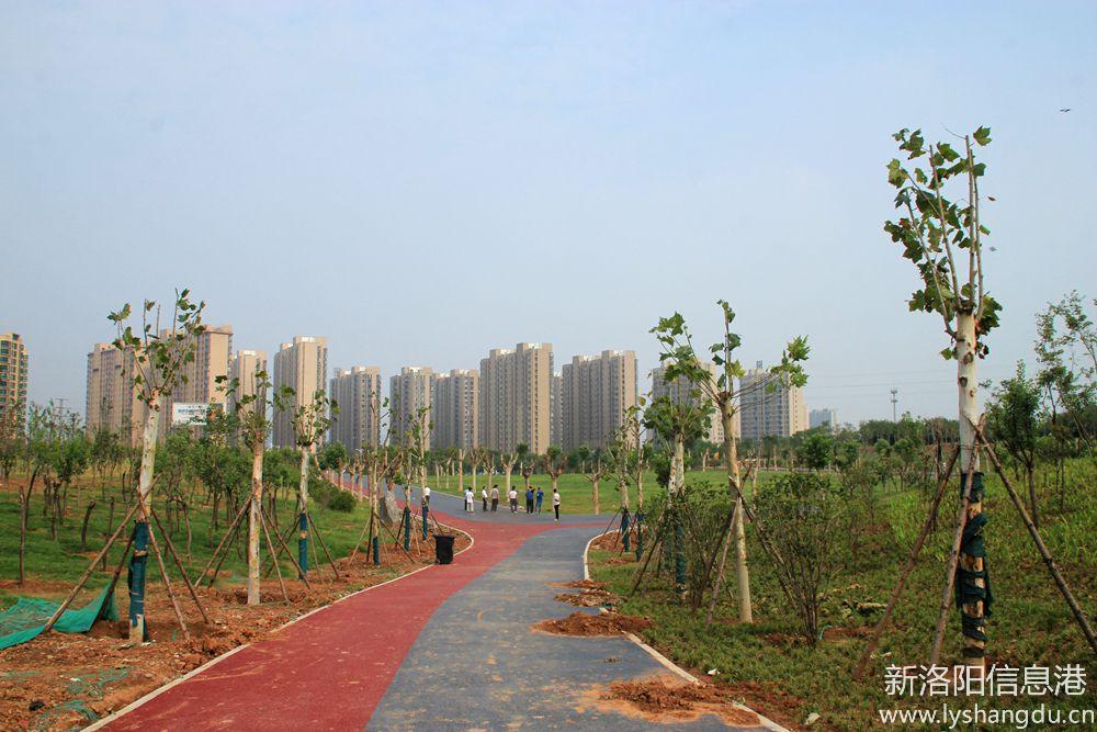 照片帖(610)洛阳市周山森林公园提升改造工程随拍(二)