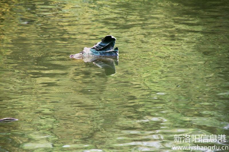城市公园_美丽兴洛湖