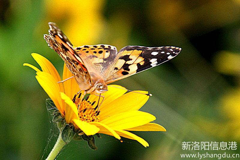 谁说百日无好花,绚丽多彩的百日菊