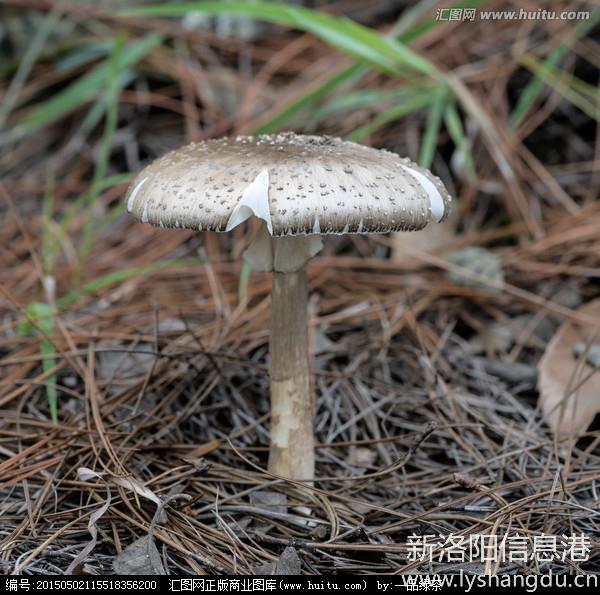 这种野生植物的名字叫什么?