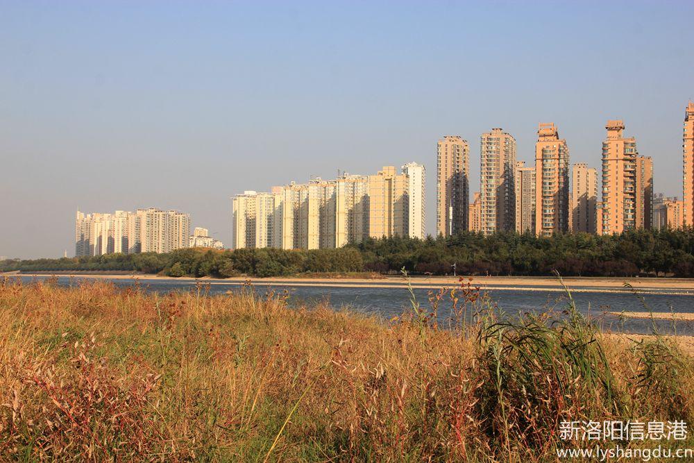 洛浦河边拍芦苇2.jpg