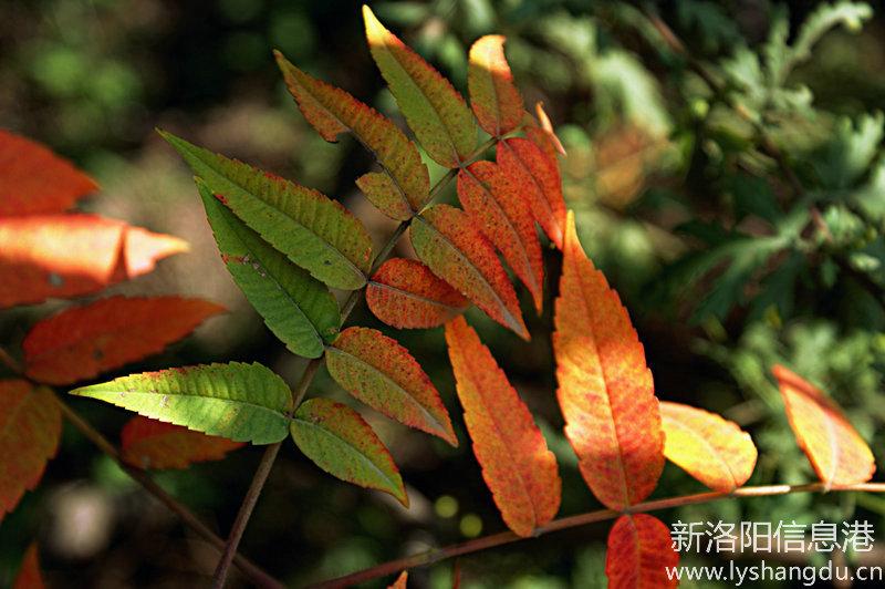 五彩斑斓的秋叶