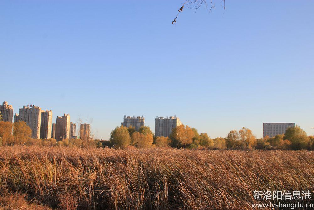 照片帖(738)洛河湿地随拍(二)天蓝水清空气好,污染治理见成效。