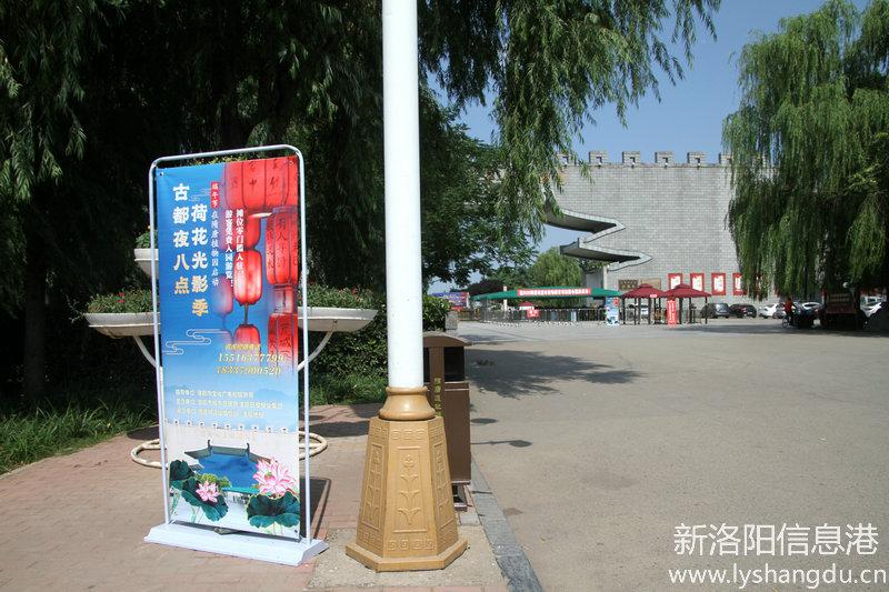 张随山荷花摄影展在洛阳隋唐城遗址植物园举行