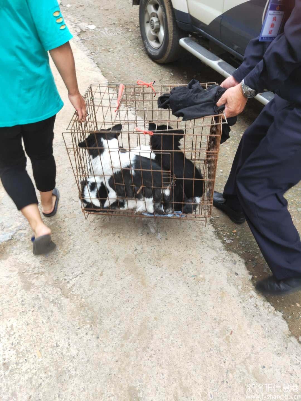 涧西一家无证养犬6只!南昌路派出所处置一养犬扰民警情