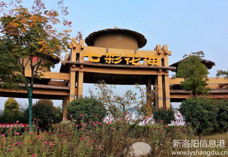 """宜阳县连庄镇""""七彩花海""""景区一年四季有花观赏"""