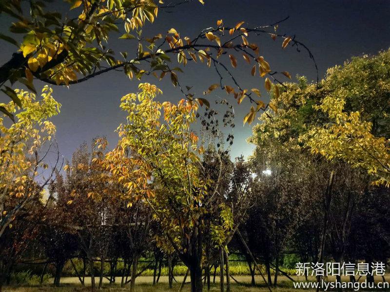 深秋的夜晚