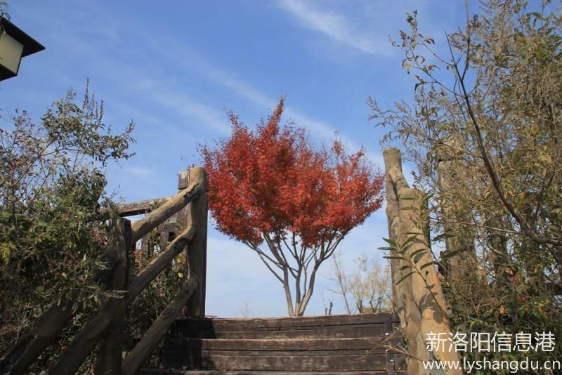 万安山叶秋景95.jpg