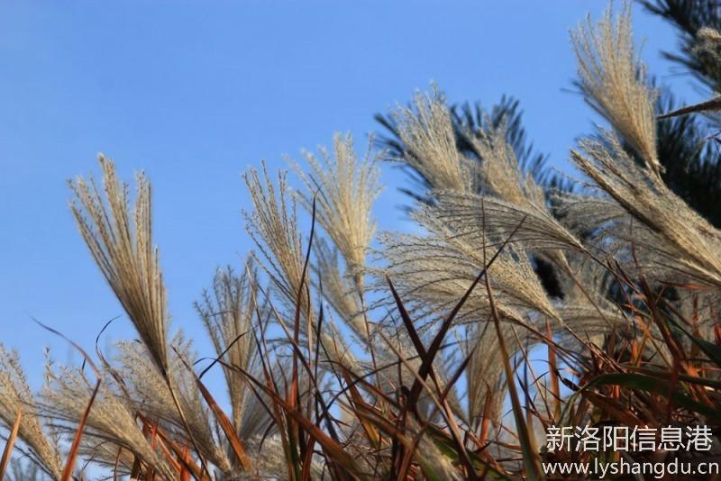 照片帖(1088)万安山游秋景随拍之十二