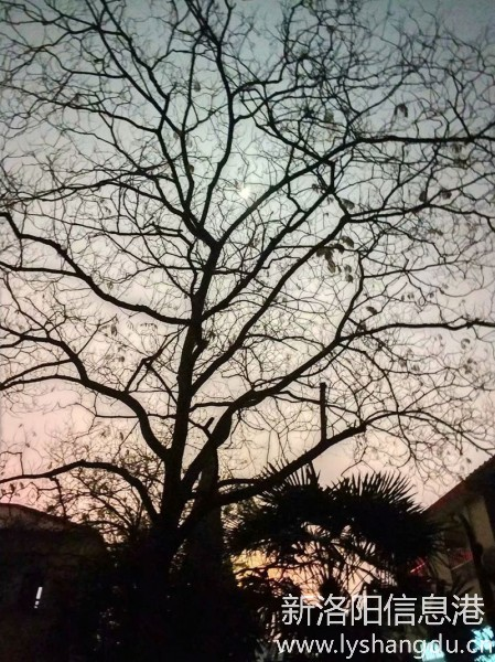 月光下的树影1.jpg