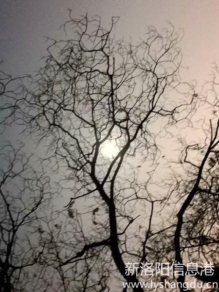 月光下的树影2.jpg