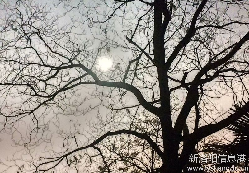 照片帖(1092)手机夜拍:月光下的树影。
