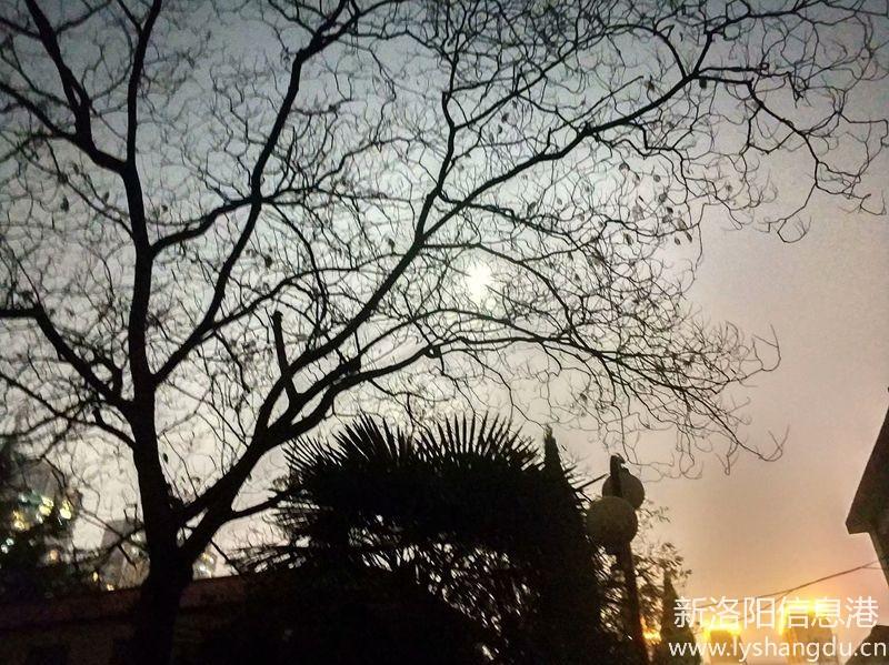 月光下的树影6.jpg