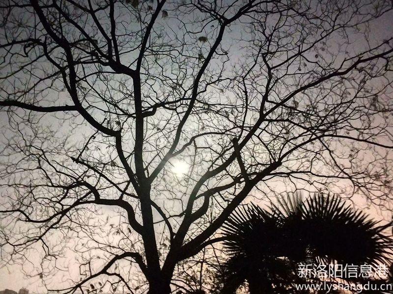 月光下的树影8.jpg