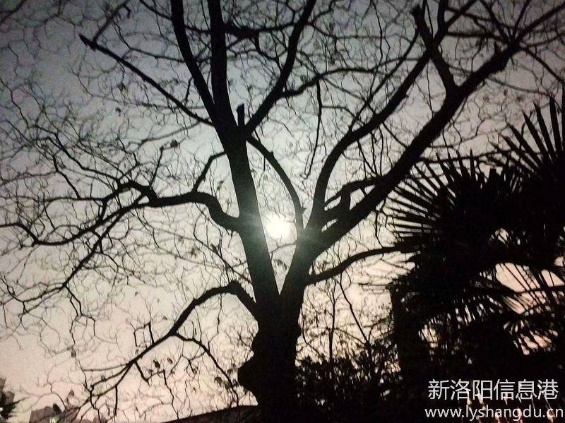 月光下的树影7.jpg