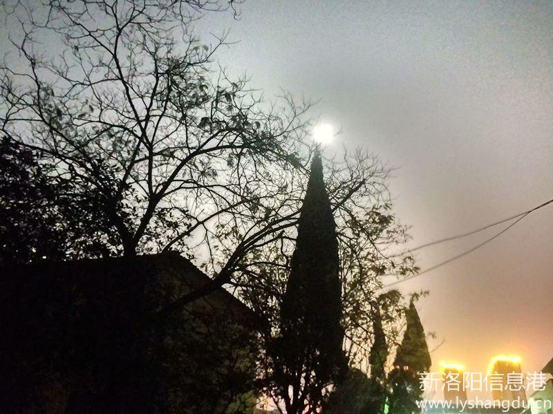 月光下的树影10.jpg