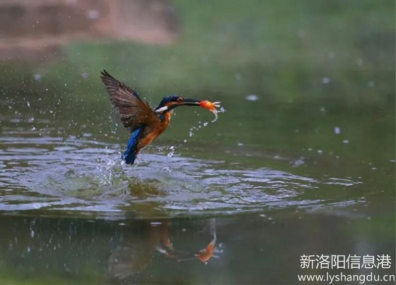 【途巴户外】旅行摄影约伴拍鸟摄影团活动计划